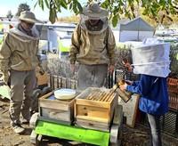 """""""Im Winter fressen die Bienen den gesammelten Honig"""""""