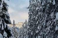 Bis Montag sind im Schwarzwald bis zu 25 Zentimeter Neuschnee möglich