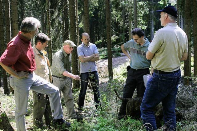 Der Gemeindewald ist ein richtiges Vorzeigemodell