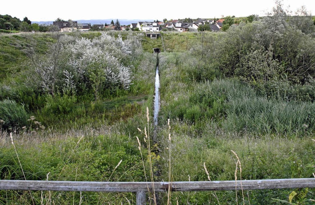 Schutz vor Hochwasser: Am Damm des Rüc...r Anforderungen nachgebessert werden.   | Foto: Markus Zimmermann-Dürkop