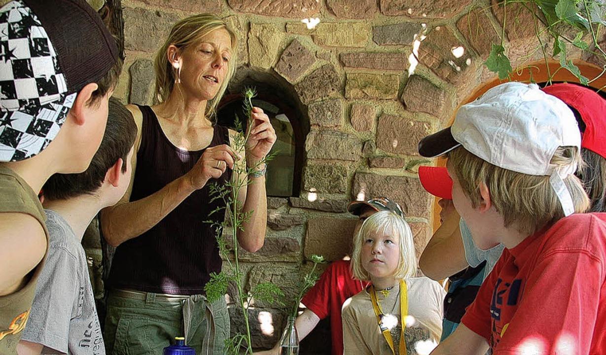 Heute geht es um die Wilde Möhre. Biologin Ulrike Hecht erklärt die Pflanze.     Foto: ClR (2)<?AGev?><?_AGev?>/<?AGev?><?_AGev?>Ökostation