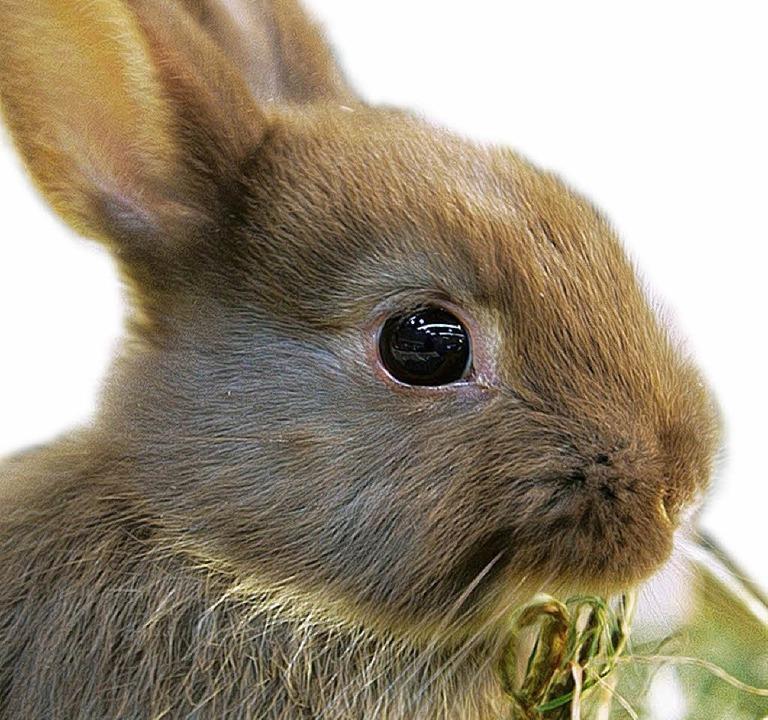 Kaninchen vermehren sich sprichwörtlich.     Foto: BZ