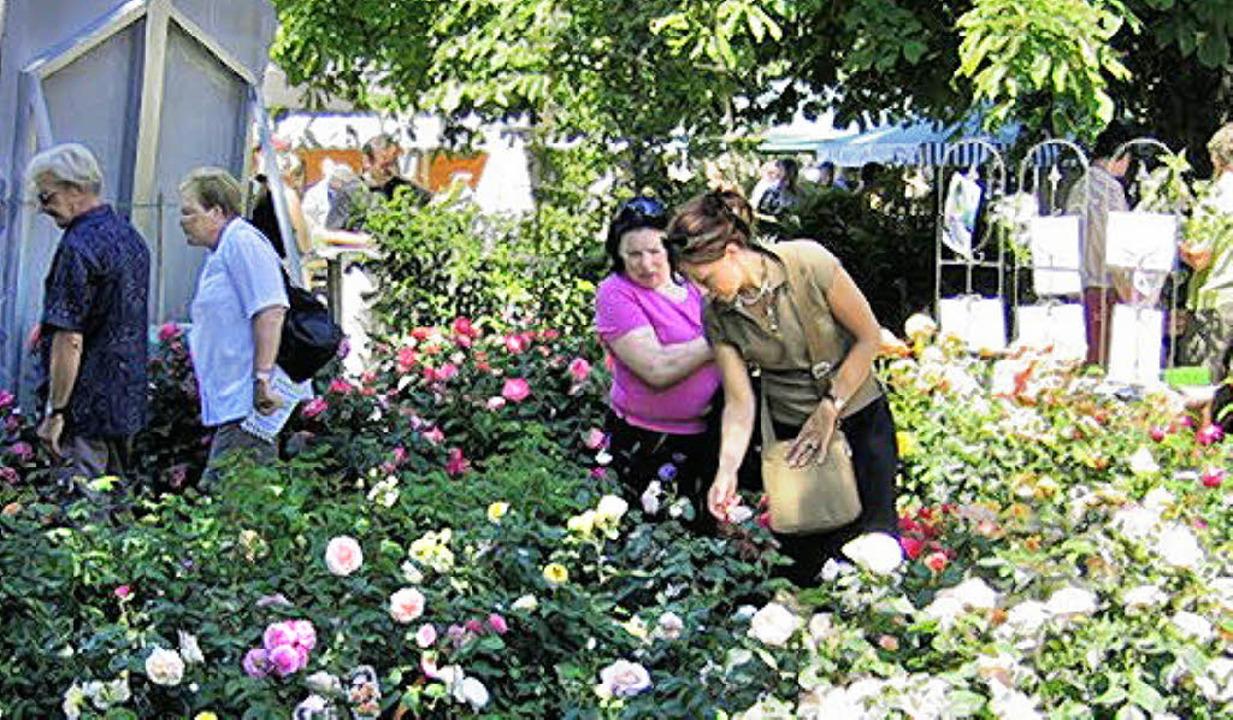 Blütenträume verspricht die Diga am Wo...e von Schloss Beuggen bei Rheinfelden.  | Foto: Veranstalter