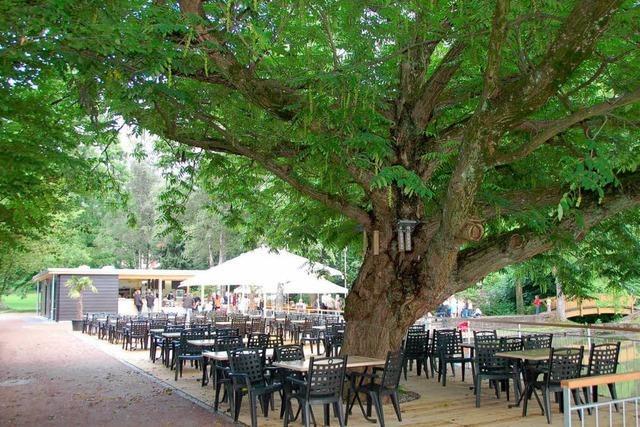 Sitzen unter den Blättern der Akazie