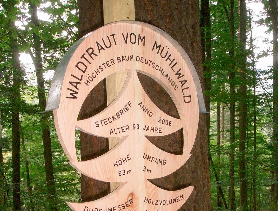 | Foto: Forstamt Freiburg