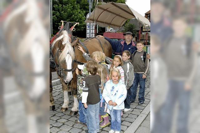 Bilder des Tages: Zwei Pferde ,
