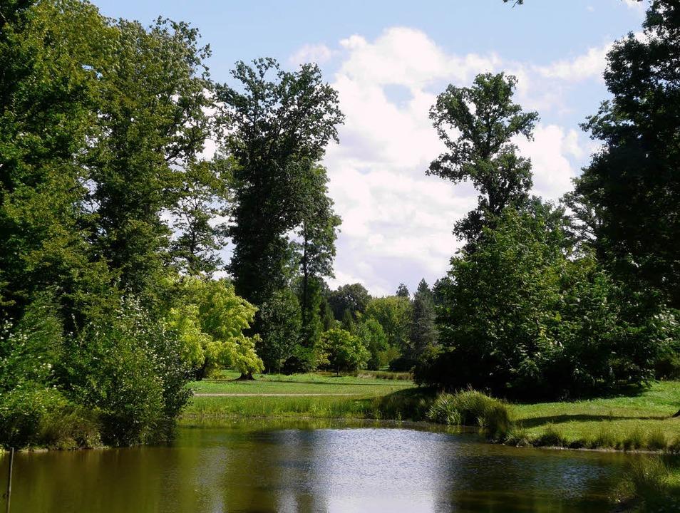 Ein Park wie ein Landschaftsgemälde: Licht, Laub, Wasser   | Foto: tolksdorf
