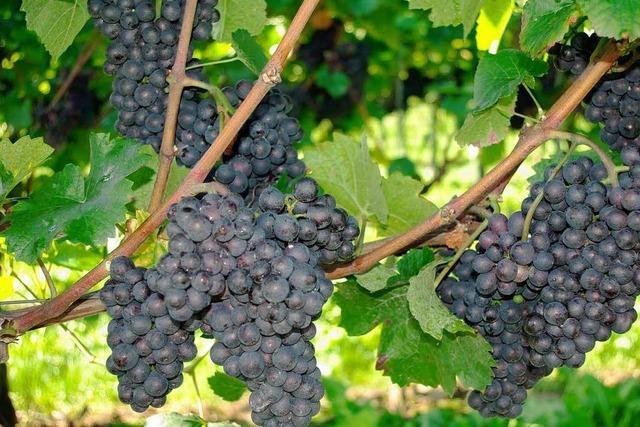 15. Durbacher Weintag am Sonntag