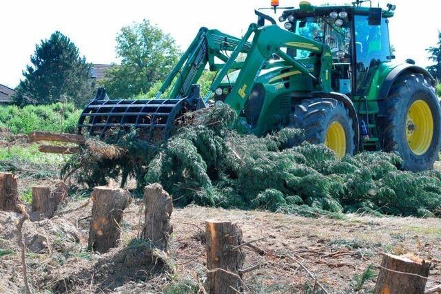 Bäume müssen Baugebiet weichen
