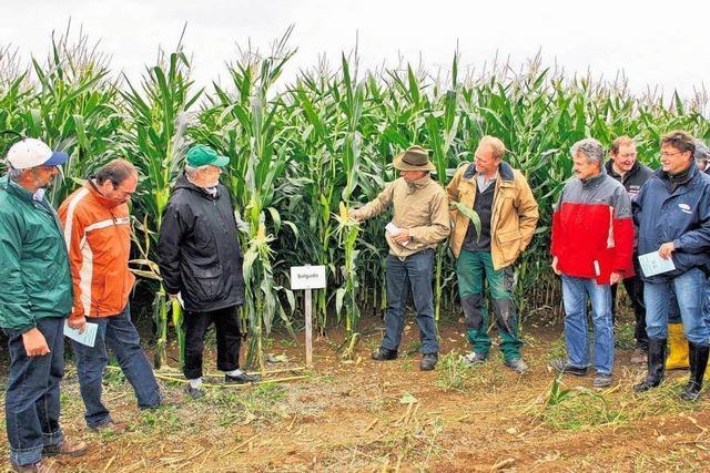 Immer mehr Mais für Biogasanlagen