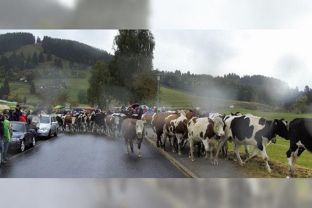 Für 82 Rinder endet die Weidesaison
