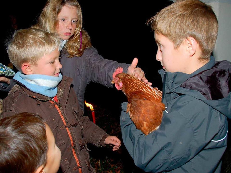 Jonas Jehle ist sehr stolz auf seine &...äglich mit einem frischen Ei versorgt.    Foto: Jutta Binner-Schwarz