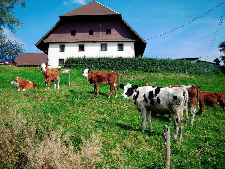 Die Kühe wundern sich über die Wanderer.  | Foto: Karin Heinze