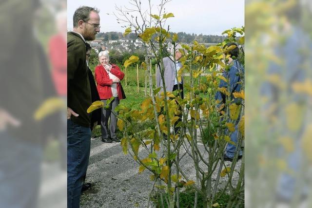 Bibelgarten ruht im Winter