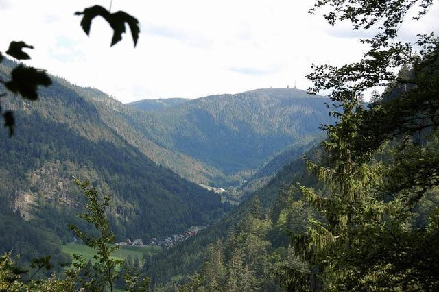 Im Oberrieder Gemeindewald wieder gute Erlöse