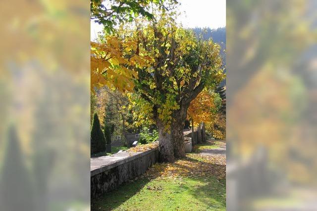 Mit den Blättern fallen wieder kranke Bäume
