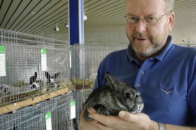 Vier Züchter zeigen 57 Kaninchen