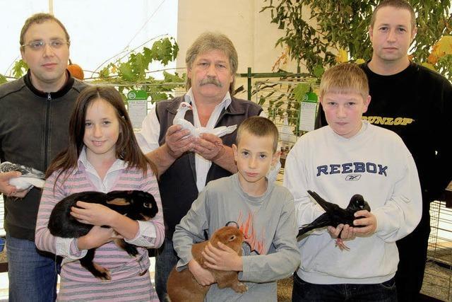 Gepflegte Hasen und farbenprächtige Tauben