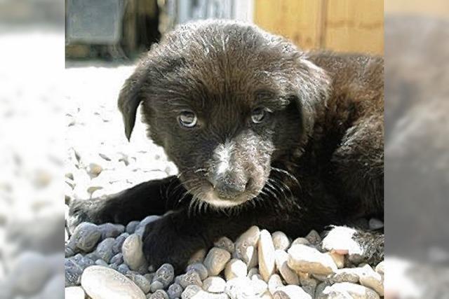 Hundebaby darf den Irak verlassen