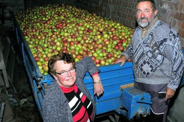 Sonderschichten an der Apfelsafttrotte