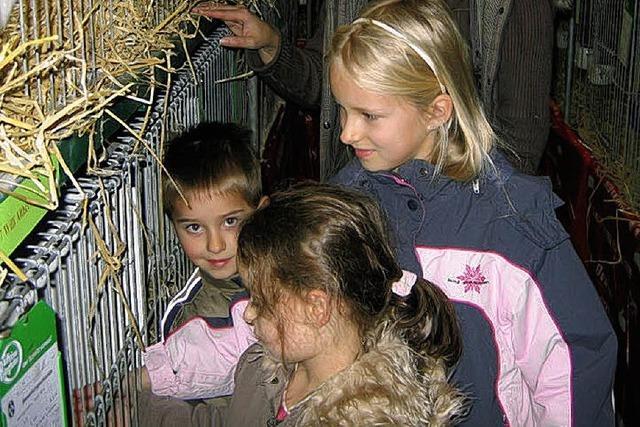Die Preisrichter bewerten 107 Tiere