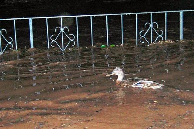 Hochwasser: Keine Landeshilfe für Ettenheim