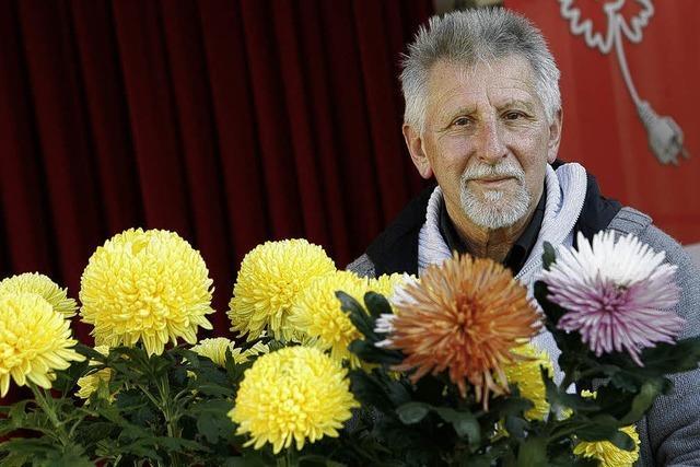 Meister der Chrysanthemen
