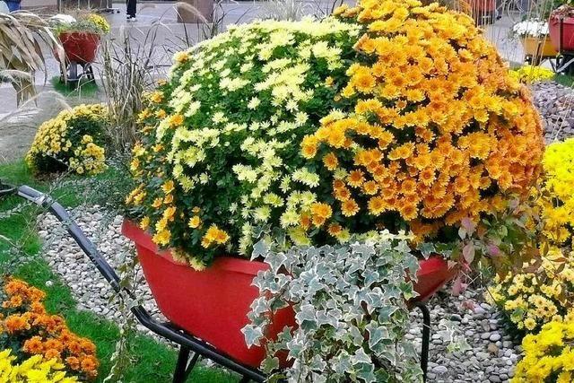 Blütenpracht des Eurodistrikts in Lahr