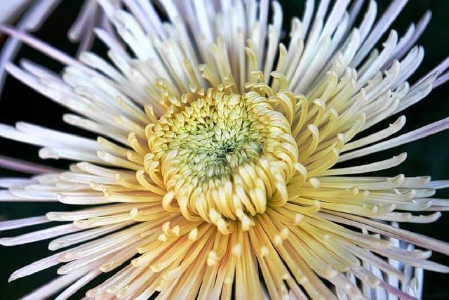 Blumenschau lockt 300.000 Besucher