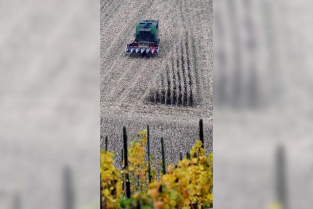 Bilder des Tages: KLEINE FARBTUPFER