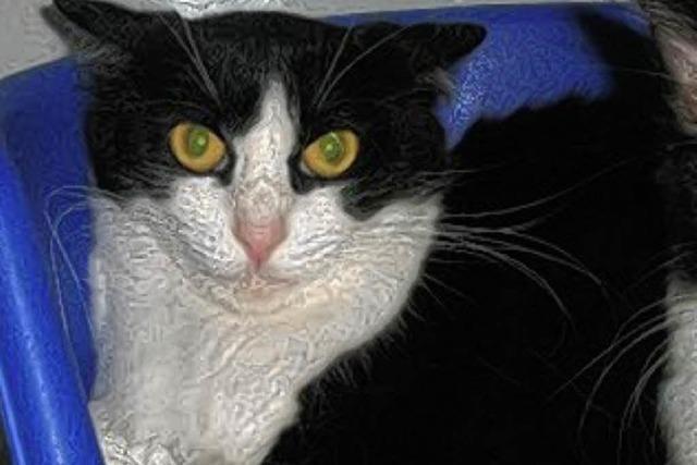 Attraktive Katzendame