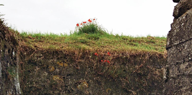 Neues Leben:   Mohn   steht für das si...f den Schlachtfeldern von Flandern.     | Foto: Traub /AFP