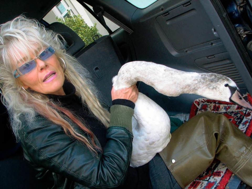 Carmen Weitzel mit dem verletzten Schwan.  | Foto: Hildegard Siebold