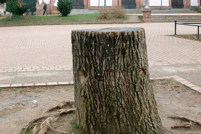 141 Bäume im Stadtgebiet müssen fallen