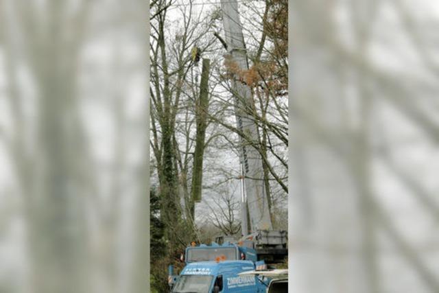 Bäume haben Kapelle bedroht