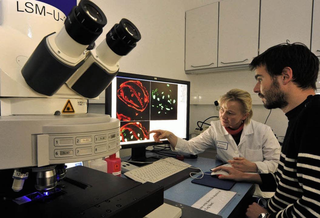 Zellen live und leuchtend auf dem Bild...e Zeiss-Mikroskop der Bioss-Forscher.   | Foto: Thomas Kunz