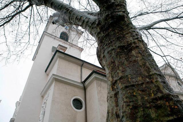Der Kirchbaum muss weg