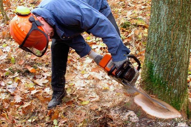 Arbeiter fällen rund 8000 Bäume
