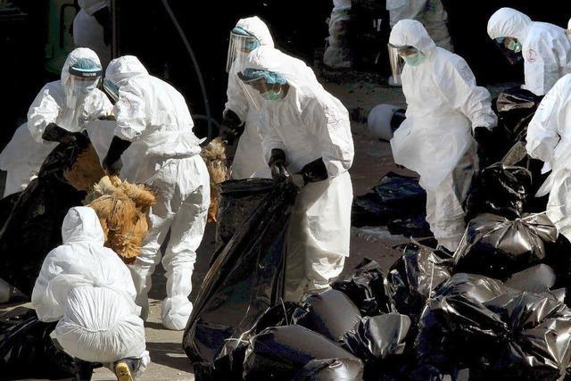 Vogelgrippe kehrt zurück