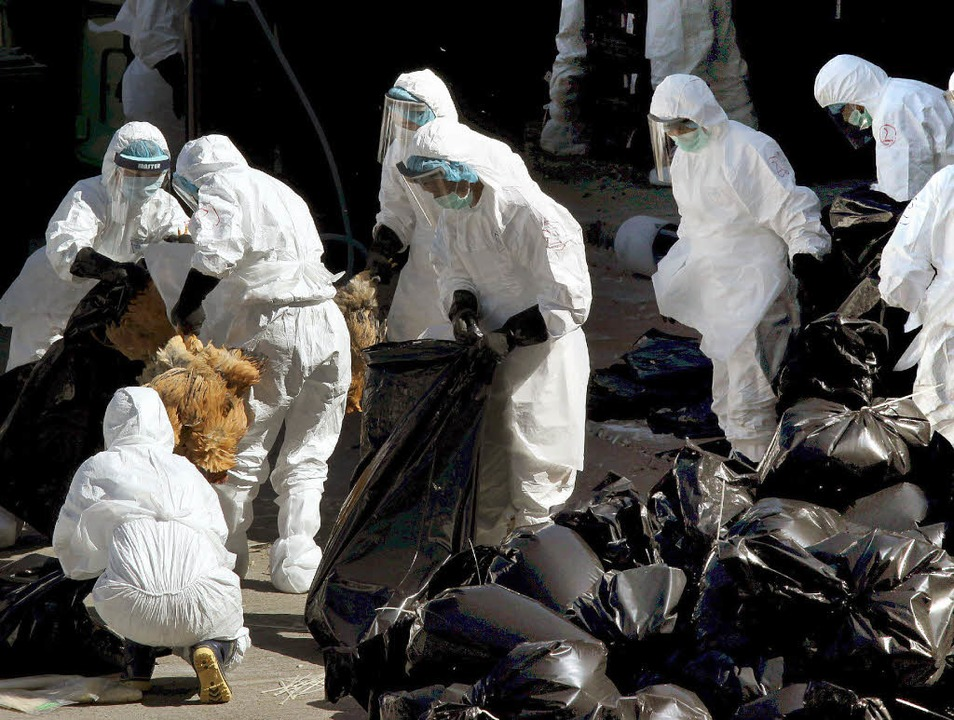 80000 Tiere wurden in Hongkong seit Mittwoch gekeult.     Foto: dpa