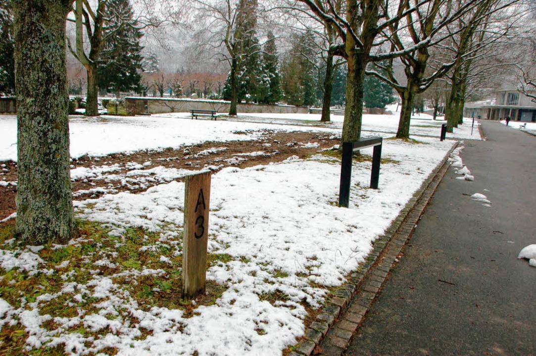 Zwei  Felder   auf dem Lörracher Haupt...hof sind zur Umgestaltung vorgesehen.   | Foto: Trenz