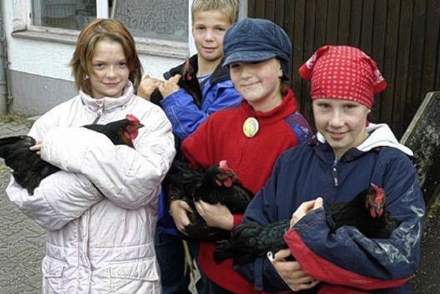 2000 Hühner in sechs Ställen