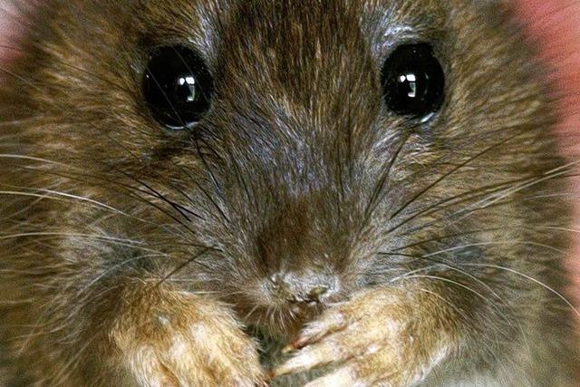 FDP-Politiker: Arme Leute, sammelt Ratten