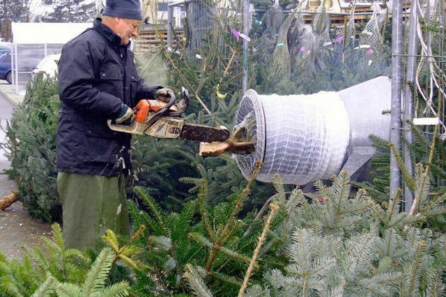 In Waldkirchs Forst wächst der (fast) perfekte Christbaum
