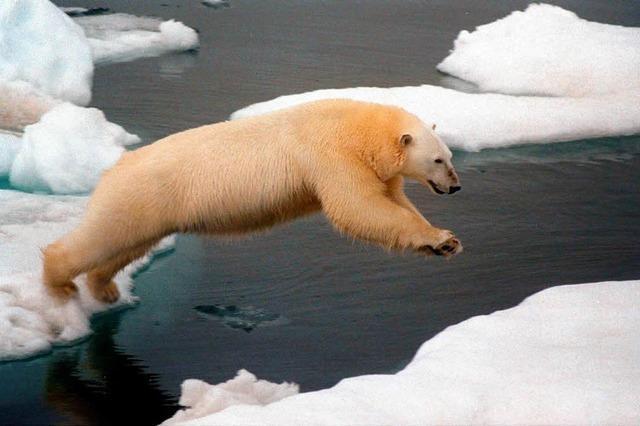 Das Arktis-Eis ist so dünn wie nie zuvor