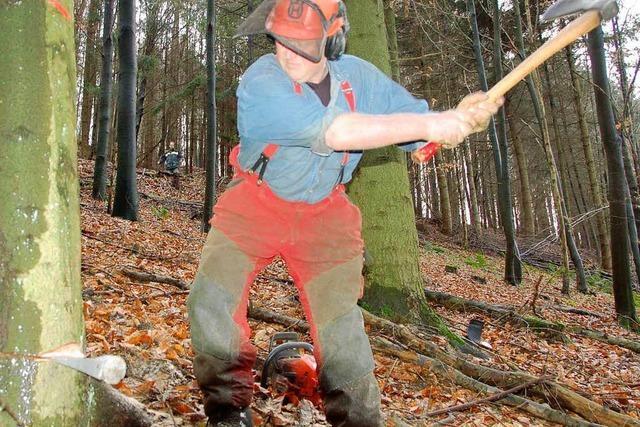 Wald bleibt ein Verlustgeschäft
