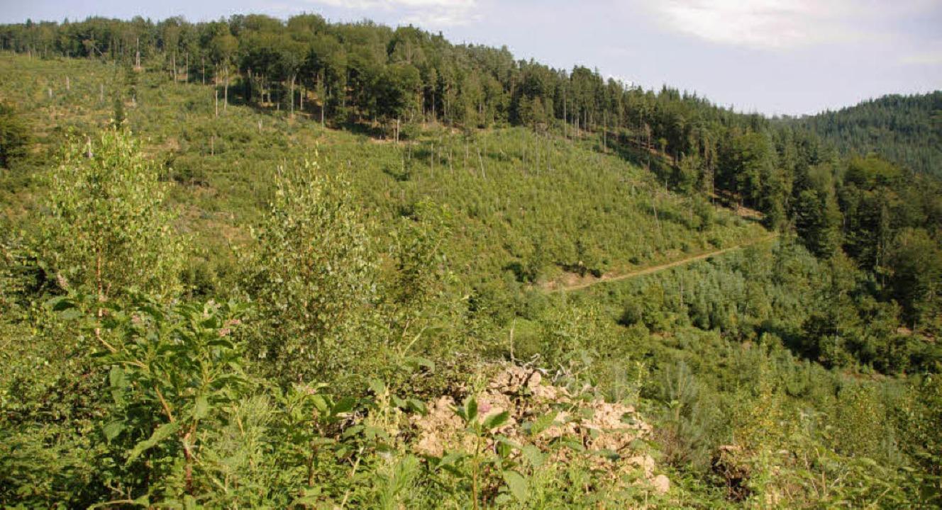 Bald kümmert sich noch  ein zweiter Förster um den Friesenheimer Wald.     Foto: peter bomans