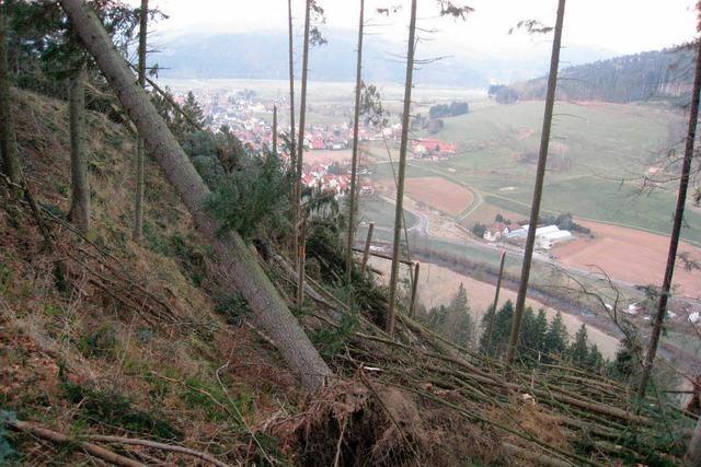 80 000 Festmeter Sturmholz