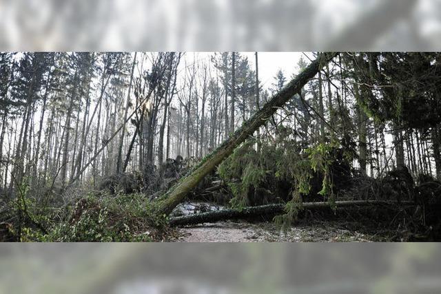 Viele Wanderwege sind durch Bäume blockiert