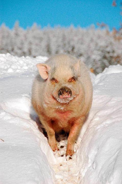 …sie kümmert sich auch um die kleineren Tiere wie Zwergschwein Mary.  | Foto: Hoffmann